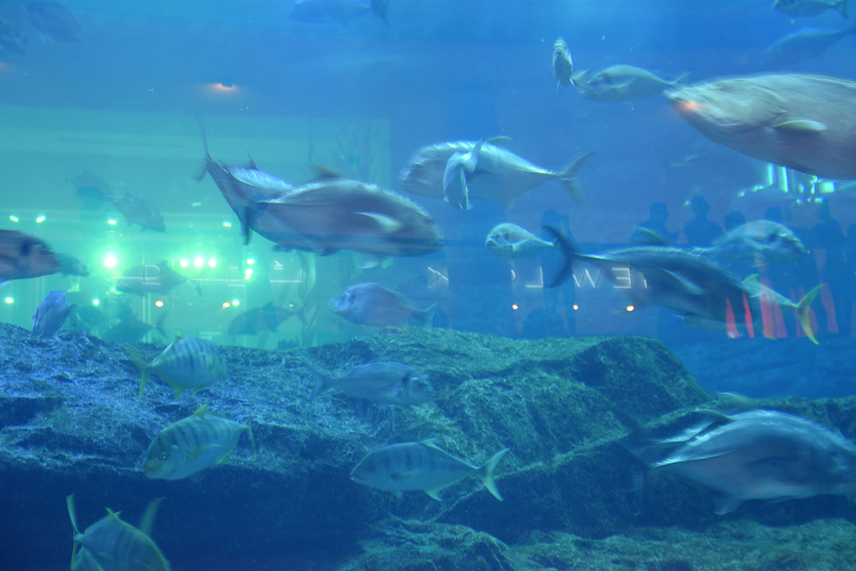 Fish Acquarium inside the Mall