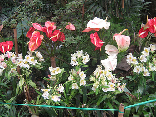 Flower Garden at Gangtok
