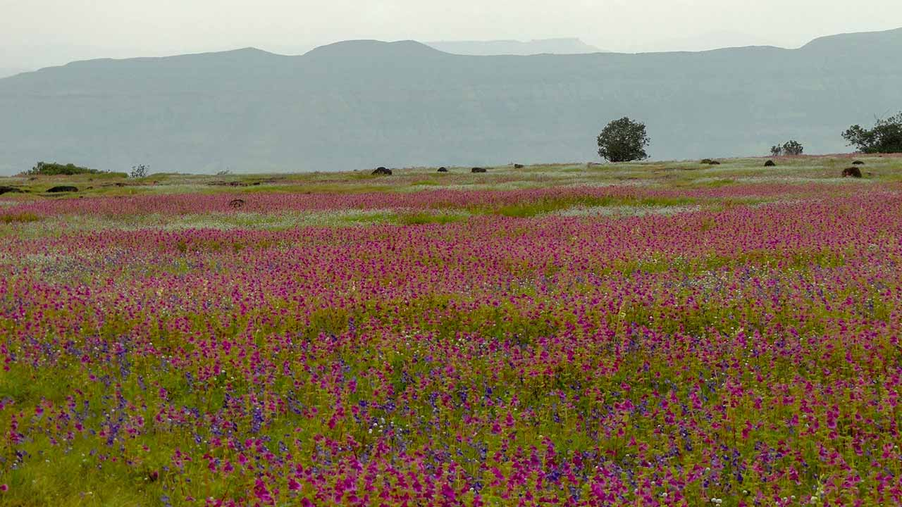 Flowers at Kas Plateau
