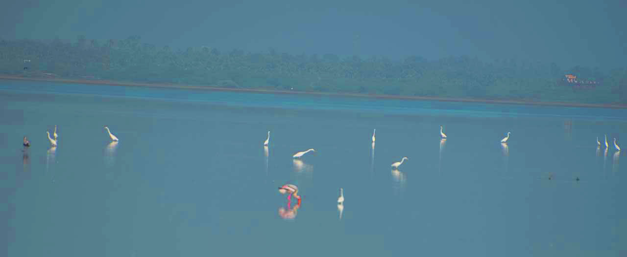 Birds in the river on the way to Puducherry